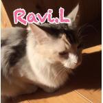 Ravi.L