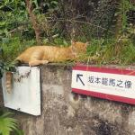 userPhoto