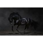 くろうま  Blackhorse