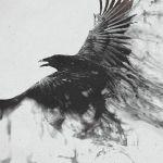 crow352