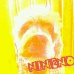 nineno.9