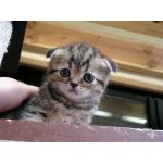 子猫のわんこ