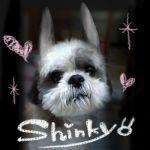 shinkyo