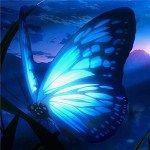 アゲハ蝶の花びら