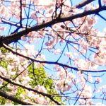 桜月/来栖