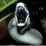 黒蛇ちゃん