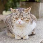 猫野ニャン太郎