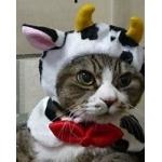 MAZICAL-CATS