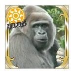 gorillaP(229)