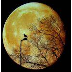 不可視境界線の月花