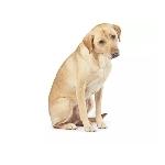神兼日本大統領アベシンゾー陛下