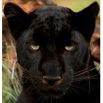 黒鉄 豹一