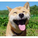 sillydog