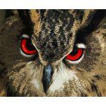 真っ赤な目をしたフクロウ