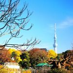 Toshi樹