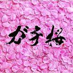 Gachi桜