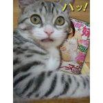 ☆野良猫☆