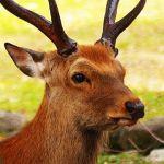 鹿(地デジ非対応)