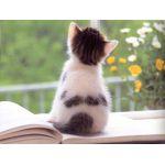 猫背ぬこねこ