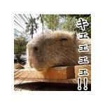 Capybaraaa