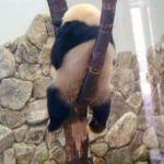ブラックパンダ団