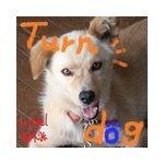 Turndog