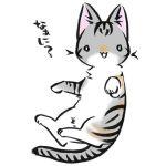 toko@hisui