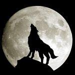 通りすがりの月光夢師