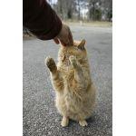 病み猫タマ