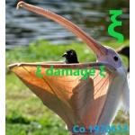 ξ damage ξ