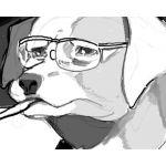 江戸屋犬八