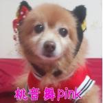 桃音 舞 pink