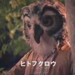 ヒトフクロウ