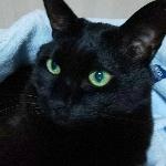黒ネコ軍曹