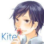 Kite@カイト