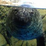 てつを@aquarium