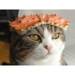 アーマード猫