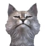 猫名タビビト