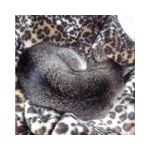 tom@cat-tail
