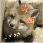 子狐-こぎつね-
