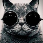 【猫缶】@壱弐