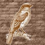 SparrowTune