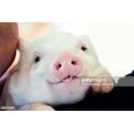 豚汁まみれ