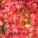 秋色タペストリー