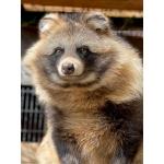 バール犬(積雪0.5cm)