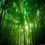 Mori@Forest