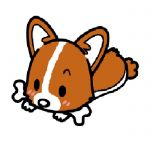 幼児体型仔犬