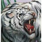 虎。(二匹目)
