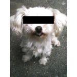 片桐氷刃/白狗