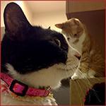 2匹の猫(ハッチとマック)野良猫
